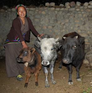 Diki G. ist hat inzwischen außer der Kuh zwei Kälber, eins ist weiblich. Die junge Mutter lebt mit ihrer Tochter noch bei den Eltern, steht nach deren Tod aber vermutlich auf der Straße. Ihre Kuh gibt 3 l Milch pro Tag.
