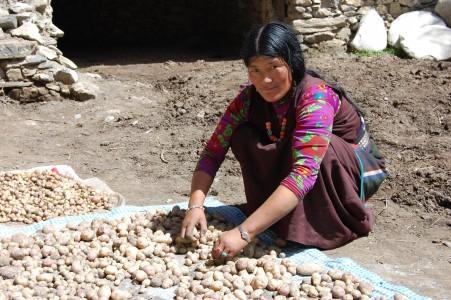 Chimba C. G. aus Charka sortiert ihre Kartoffelernte. Der Ertrag ist gering.