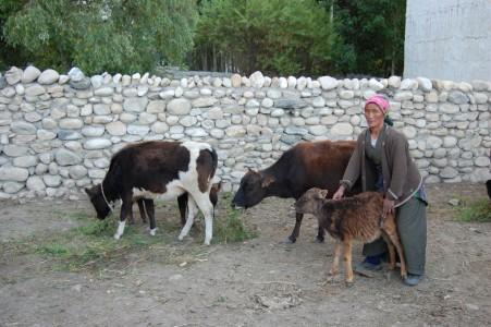 Doka G. mit ihrer Kuh und ihren drei Kälbern.