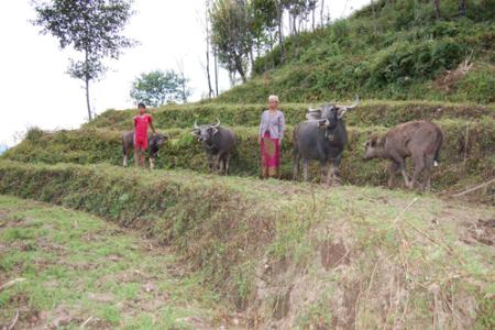 Kishna K. mit ihrem Sohn und ihren vier Wasserbüffeln. Sie ist Spitzenreiterin in Bezug auf Kälber!