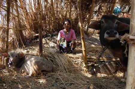 Paria P. mit ihren Wasserbüffeln