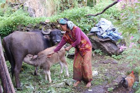 Punisara P. ist eine Witwe mit vier Kindern, ihr Wasserbüffel hat ein Kalb.