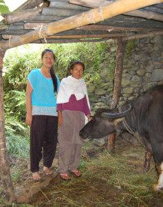 Der Wasserbüffel trägt dazu bei, dass Shunmajas Tochter eine Krankenschwesternausbildung machen kann.