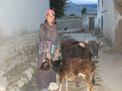 Tsering N. aus Tsarang freut sich über ihre Kuh und ihr Kalb.