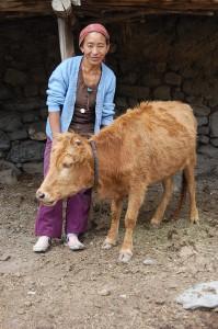 Tsiring D. mit einem ihrer Kälber. Alle größeren Tiere waren auf der Weide.