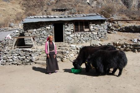 Gaki T. ist allein erziehende Mutter mit einer kleinen Tochter. Sie lebt auf 3300 m Höhe, betreibt einen kleinen Teeausschank und verkauft Nakmilch.