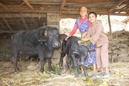 Seit ihre Mutter einen Wasserbüffel erhalten hat, könnten sie wieder Ghee essen, erzählten die begeisterten Söhne.