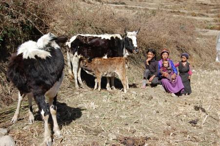 Lakpa K. hat inzwischen eine Kuh, einen Ochsen und ein Kalb.