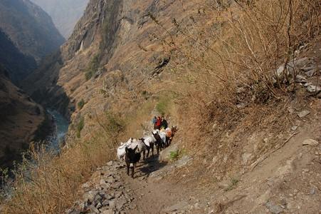 Alleinerziehende Mütter aus Eklaibhatti benutzen ihre Esel um einige Tage lang Waren zu transportieren. Das Einkommen wird geteilt. In dieser dünn besiedelten Region müssen alle Waren zu den Häusern transportiert werden.