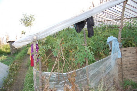 Yomend hat inzwischen zwei große Sommergewächshäuser für Tomaten. 2014 baute sie das erste.